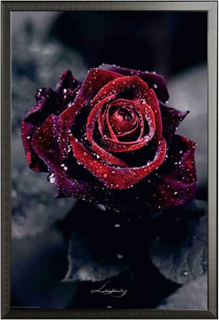 Flowers luxury rose gothic poster druck cm for Gothic wohnen