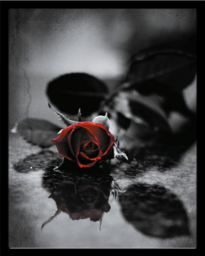 Gothic rote rose blumen fantasy mini poster druck for Gothic wohnen
