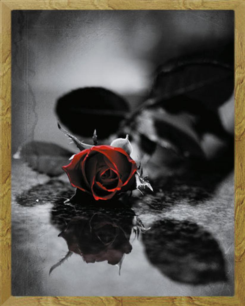 gothic rote rose blumen fantasy mini poster druck rahmen mdf oder alu ebay. Black Bedroom Furniture Sets. Home Design Ideas